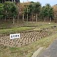 05 菜畑遺跡