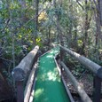 15 浮島の森